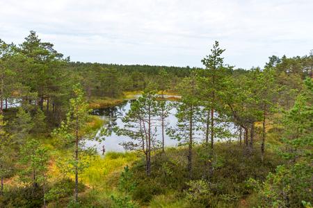 Viru bog (Viru raba) in the Lahemaa National Park in Estonia. Viru bog study trail