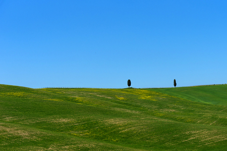Beautiful rural landscape, cypress trees, green field and blue sky in Tuscany near Pienza. Spring in Tuscany, Italy Stockfoto