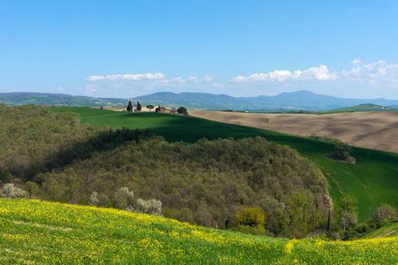 Beautiful rural landscape, cypress trees, green field and blue sky in Tuscany near Pienza. Spring in Tuscany, Italy 免版税图像