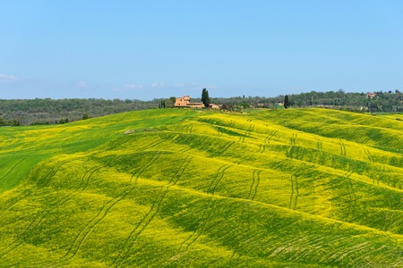 Beautiful rural landscape, cypress trees, green field, colorful spring flowers and blue sky in Tuscany near Pienza. Spring in Tuscany, Italy