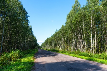 Broken empty asphalt country road surrounded by trees in sunny summer day. Road with holes in the green wood. A hole in the road