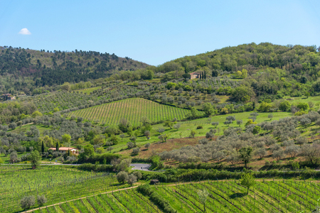 Amazing springtime colorful landscape in Chianti, Tuscany. Green fields and vineyards with olive trees in Tuscany, Italy