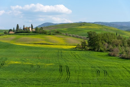 Amazing spring colorful landscape. Beautiful farmland rural landscape, cypress trees and colorful spring flowers in Tuscany, Italy. Typical rural house. Stockfoto