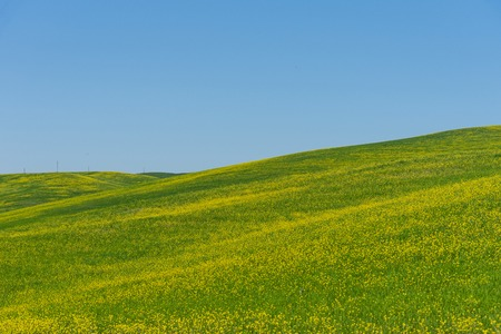 Amazing spring colorful landscape. Beautiful farmland rural landscape, cypress trees and colorful spring flowers in Tuscany, Italy. Beautiful spring landscape with blooming raps field. Banco de Imagens