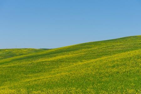 Erstaunliche bunte Frühlingslandschaft. Schöne ländliche Landschaft des Ackerlandes, Zypressen und bunte Frühlingsblumen in der Toskana, Italien. Schöne Frühlingslandschaft mit blühendem Rapsfeld. Standard-Bild