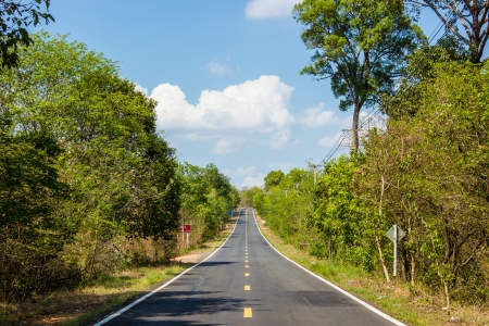 The Asphalt road and green trees in asia. photo