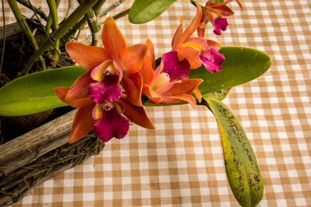 bri: Orchids, flowers, orange, fresh, bright, beautiful, background.