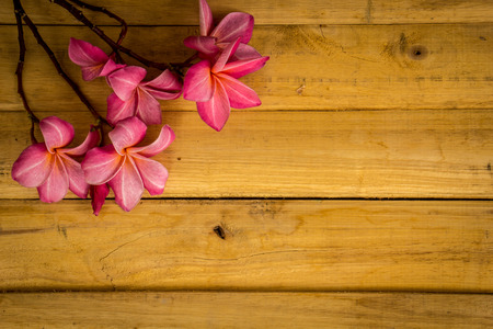 flowers beautiful: Flower, plumeria, flooring, textures, red flowers, beautiful plants. Stock Photo