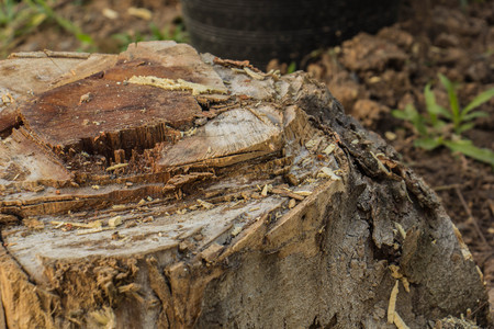 stumped: stump tree plant on green field use for gardening topic