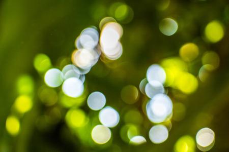 vibrant background: Bokeh background of foliage. Nature composition. Stock Photo