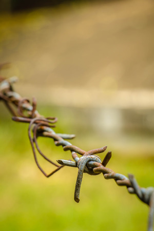 Barbed wire fence in a farm, with green background