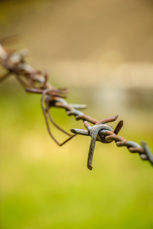 wire fence: Barbed wire fence in a farm, with green background