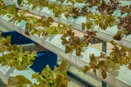 corridors: Organic hydroponic vegetable cultivation farm