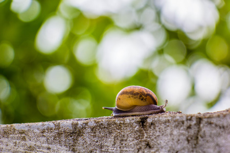 Snaile on the Concrete wall in macro close-up blurred background