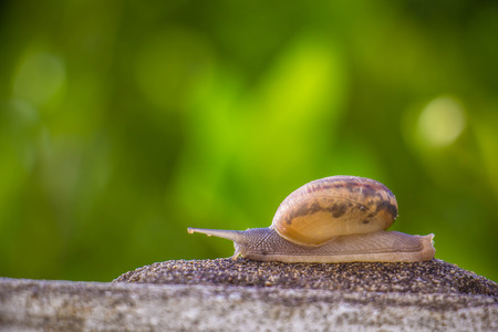 babosa: Snail on the Concrete wall in macro close-up Morning sun blurred background
