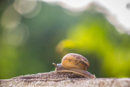Snail on the Concrete wall in macro close-up Morning sun blurred background