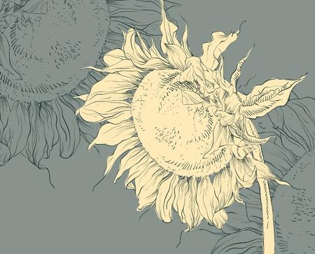 chamomile flower: floral background
