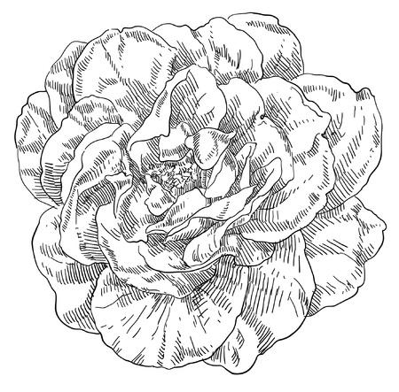 Hand drawn flower Stock Vector - 18090114
