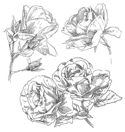 monocrom�tico: M?o flor desenhada Ilustra��o