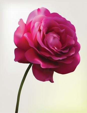 Red rose  Mesh flower Illustration