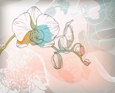 vector floral illustration of colorful summer flowers Illustration