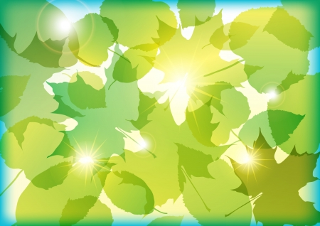 vector floral illustration of colorful summer flowers Vector