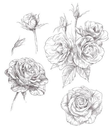 Fleurs Banque d'images - 18334618