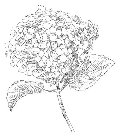 Fleurs dessin?es ? la main Banque d'images - 18335617