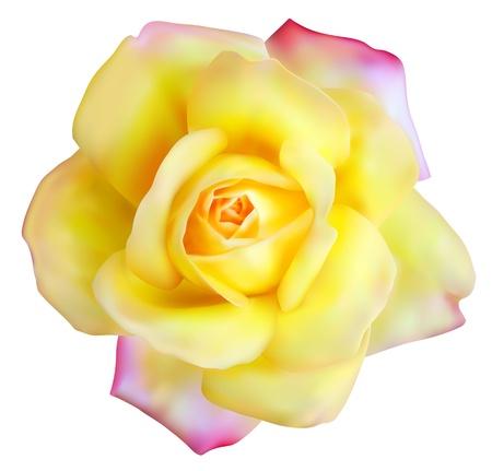 バラのメッシュの花と  イラスト・ベクター素材