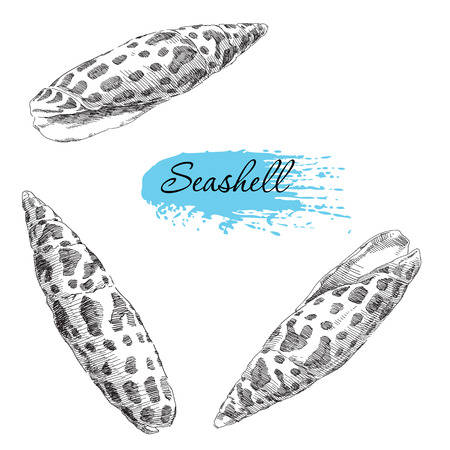sand dollar: Beauty set of various sea shells