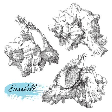Beauty set of various sea shells