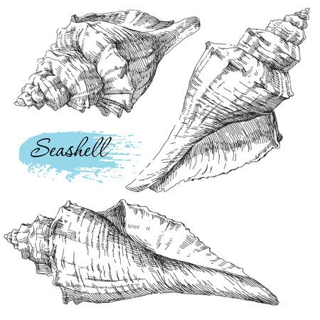 seastar: Beauty set of various sea shells