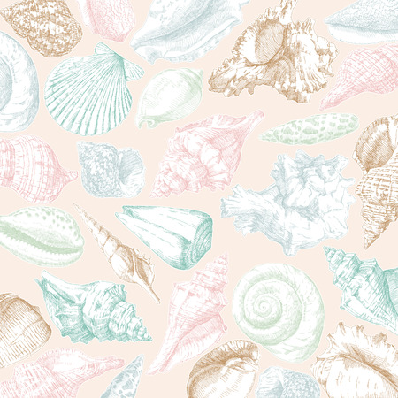 Hand drawing seashells frame card background. Vector illustration.  イラスト・ベクター素材