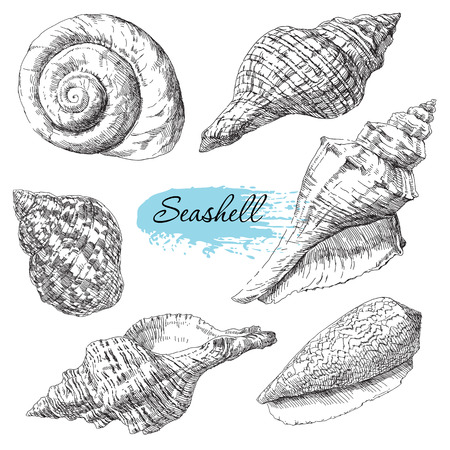 Beauty set of various sea shells vector.