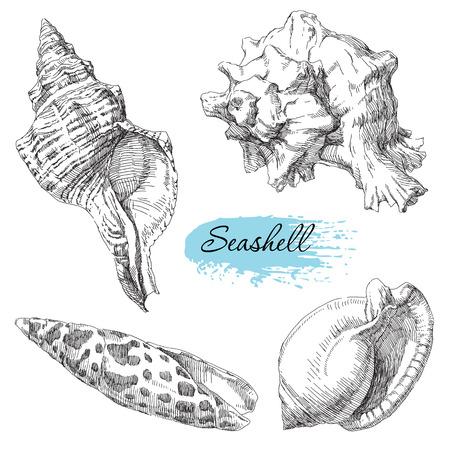 Beauty set of various sea shells vector.