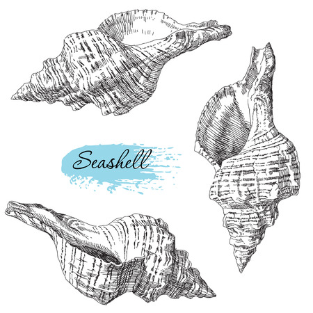 seastar: Beauty set of various sea shells vector.