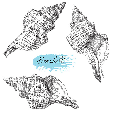 sand dollar: Beauty set of various sea shells vector.