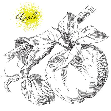 Beauty hand drawing apple on apple tree branch