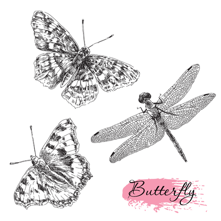 Beauty vector set of hand drawn butterfly and dragonfly