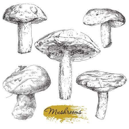Beauty vector set of hand drawn mushrooms