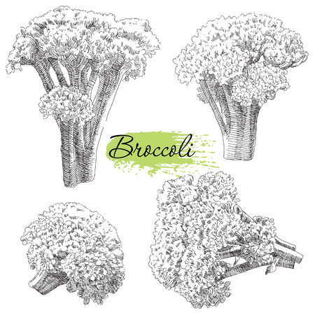 Beauty vector set of hand drawn broccoli