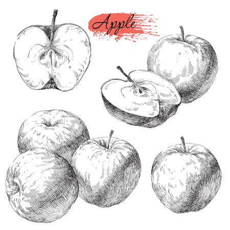 Beauty vector set of hand drawn apples