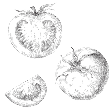 cherry tomato: Beauty set of hand drawn tomatoes. Vector illustration.