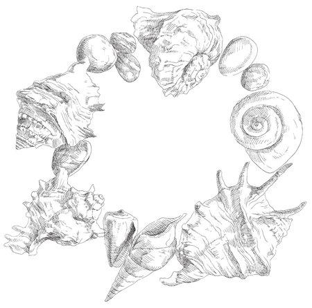 Summer beauty seashells frame background. Vector illustration.