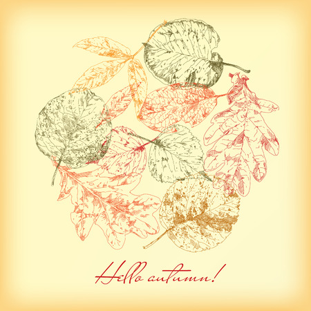 highly detailed: Botanical set. Vintage highly detailed hand drawn leaves. Illustration