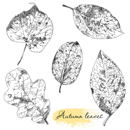 Set botanico. Foglie disegnati Vintage mano molto dettagliato.