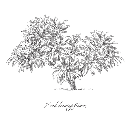 Beauty hand drawn illustration with tree. Vector. Illustration