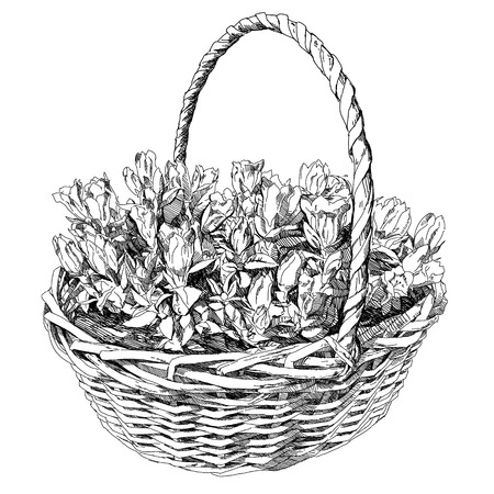illustration with basket of flowers.