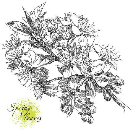 Beauty illustration with flowers. Illustration
