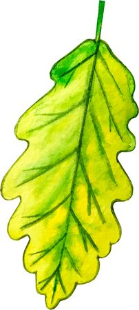 watercolor illustration. green oak leaf